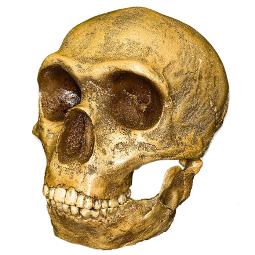 neandertal_255x255